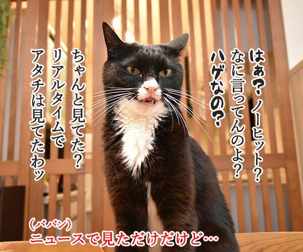 ヤクルトの小川選手がノーヒットノーランなんですってッ 猫の写真で4コマ漫画 3コマ目ッ