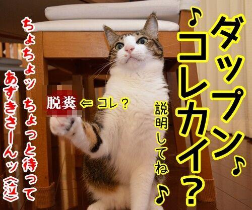 ♪ラッスンゴレライ♪ 猫の写真で4コマ漫画 4コマ目ッ