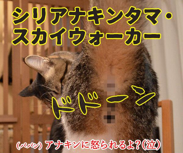 スター・ウォーズでダジャレ4連発ッ!! 猫の写真で4コマ漫画 4コマ目ッ