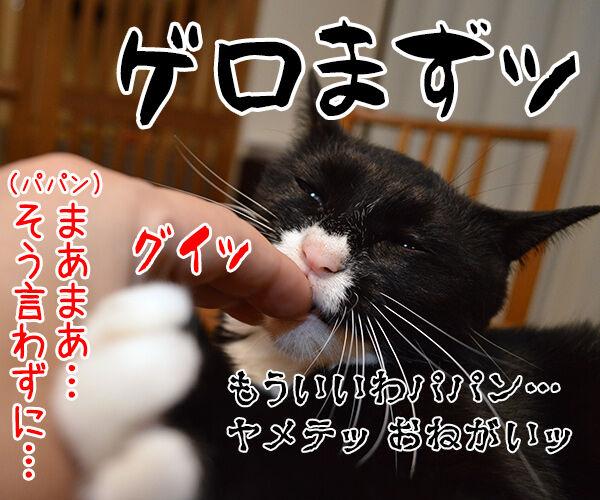 ガブリエル 其の二 猫の写真で4コマ漫画 4コマ目ッ