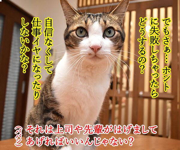 新入社員のみんなへひとことお願いしますッ 猫の写真で4コマ漫画 3コマ目ッ