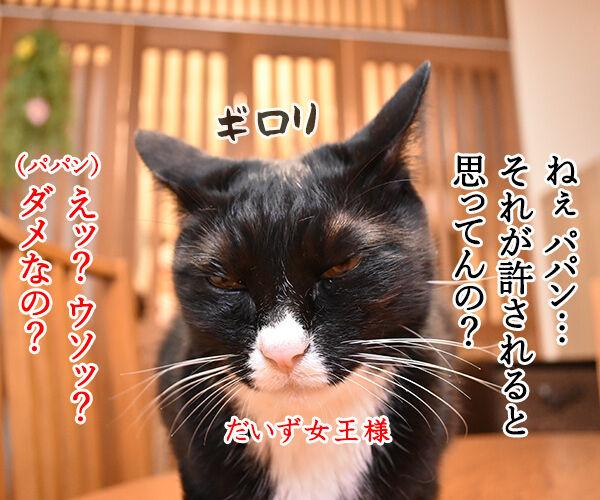 だいず女王様がお怒りですッ 猫の写真で4コマ漫画 1コマ目ッ