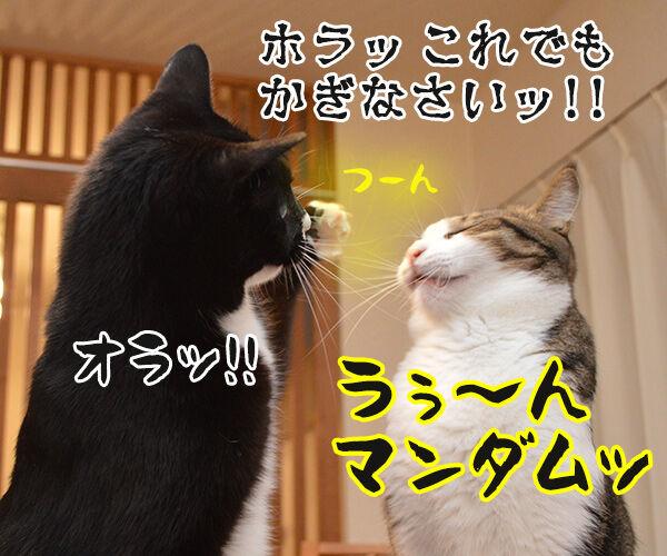 うぅ~ん… 猫の写真で4コマ漫画 4コマ目ッ
