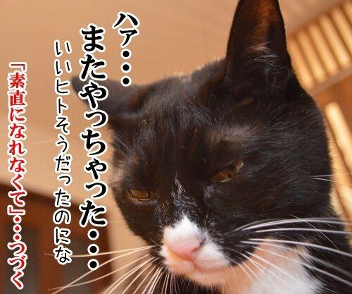 告白されたけど 猫の写真で4コマ漫画 4コマ目ッ