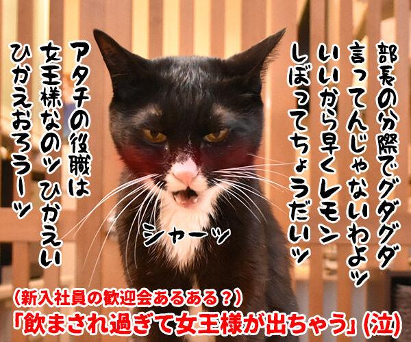 新入社員の歓迎会あるある 猫の写真で4コマ漫画 4コマ目ッ