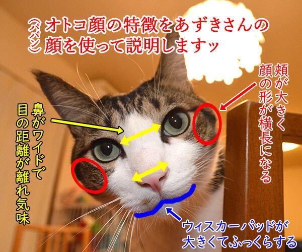 猫のオスとメスを見分けるコツ 猫の写真で4コマ漫画 1コマ目ッ