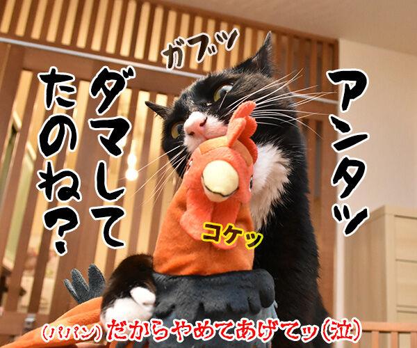 パパンは焼きとりの部位でどこが好き? 猫の写真で4コマ漫画 4コマ目ッ