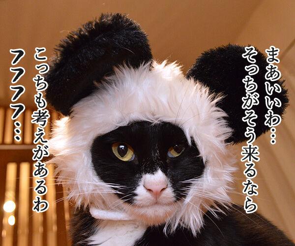 シャンシャンがうんこを販売したんですってッ 猫の写真で4コマ漫画 3コマ目ッ
