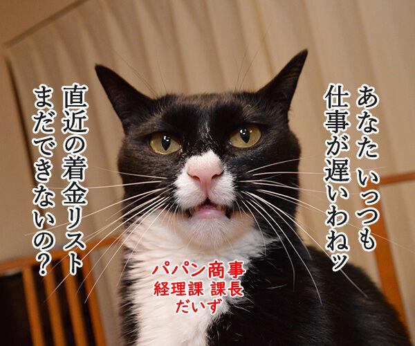 経理課あずきは大忙しッ 猫の写真で4コマ漫画 2コマ目ッ