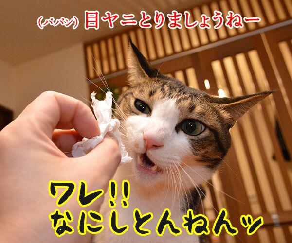 なにしとんねん、ワレ!! 猫の写真で4コマ漫画 1コマ目ッ