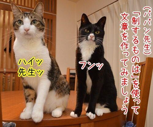 国語の授業 其の一 猫の写真で4コマ漫画 1コマ目ッ
