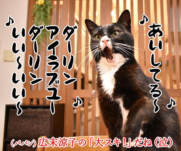 「好き」って10回言ってみてッ 其の二 猫の写真で4コマ漫画 4コマ目ッ