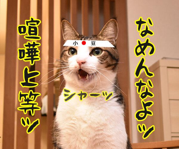 まったくあずきはドジでノロマな… 其の二 猫の写真で4コマ漫画 3コマ目ッ