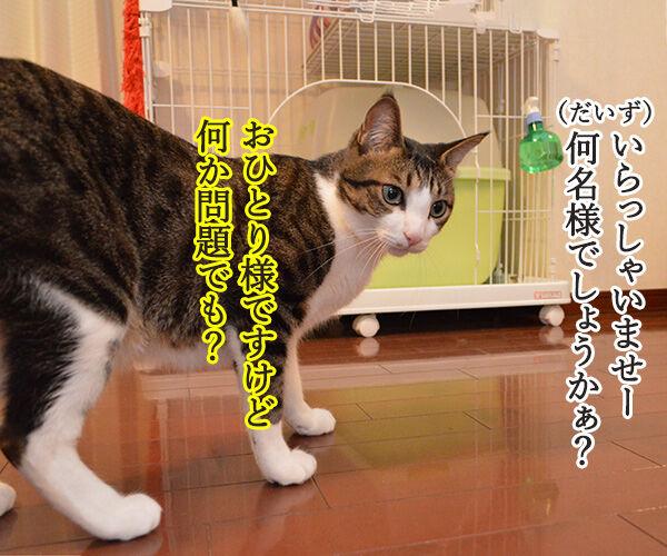 アルバイト初日(だいず篇) 其の一 猫の写真で4コマ漫画 2コマ目ッ