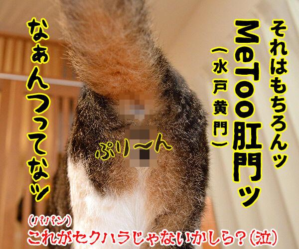 流行語大賞 ノミネート語 『#MeToo』 猫の写真で4コマ漫画 4コマ目ッ