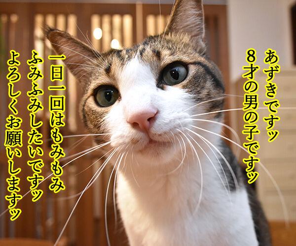 あずきとだいずをよろしくお願いしまーすッ 猫の写真で4コマ漫画 1コマ目ッ