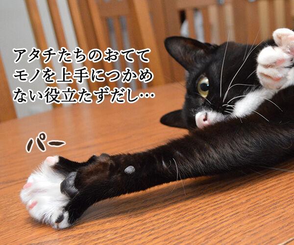 猫の手も借りたいと言うけれど… 其の二 猫の写真で4コマ漫画 2コマ目ッ