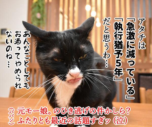 きょうは流行語大賞の発表日なのッ 猫の写真で4コマ漫画 4コマ目ッ