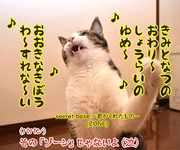 超集中状態『ゾーン』に 入れるのよッ 猫の写真で4コマ漫画 4コマ目ッ