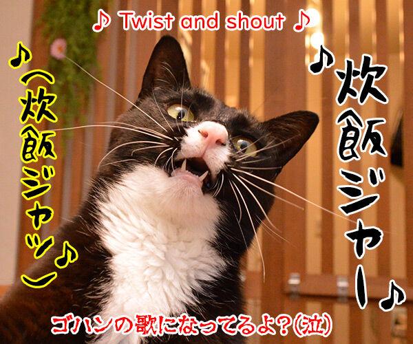 今日はロックの日だからシェケナベイベー 猫の写真で4コマ漫画 4コマ目ッ