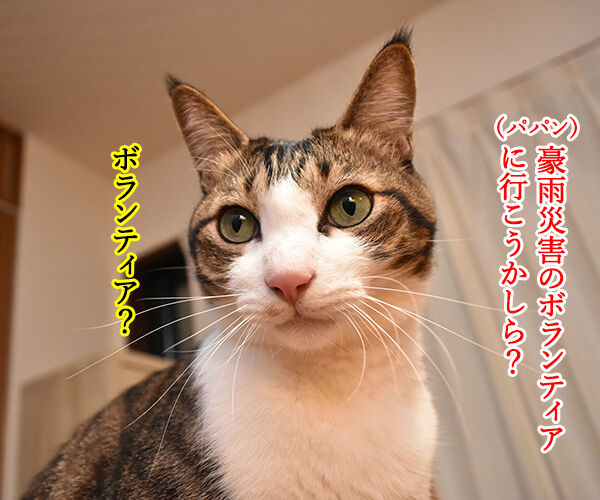 豪雨災害のボランティアに行こうかしら? 猫の写真で4コマ漫画 1コマ目ッ