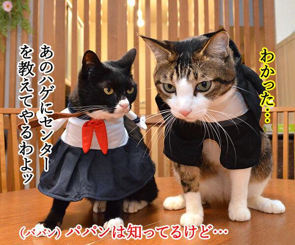 受験生のみんなッ センター試験ガンバルノヨー 猫の写真で4コマ漫画 3コマ目ッ