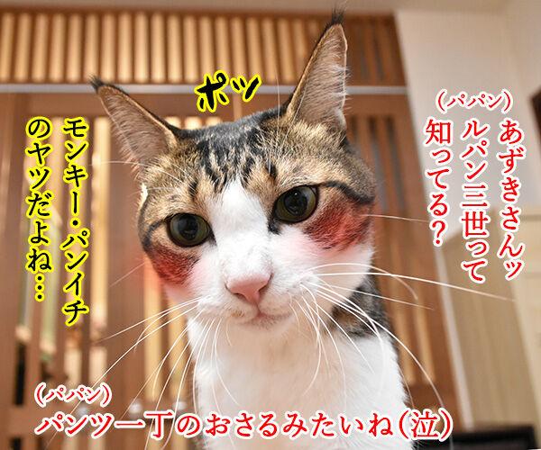 ルパンの曲といえばやっぱりこの曲よねッ 猫の写真で4コマ漫画 1コマ目ッ