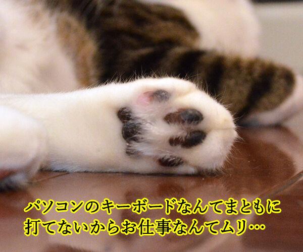 猫の手も借りたいと言うけれど… 其の二 猫の写真で4コマ漫画 3コマ目ッ