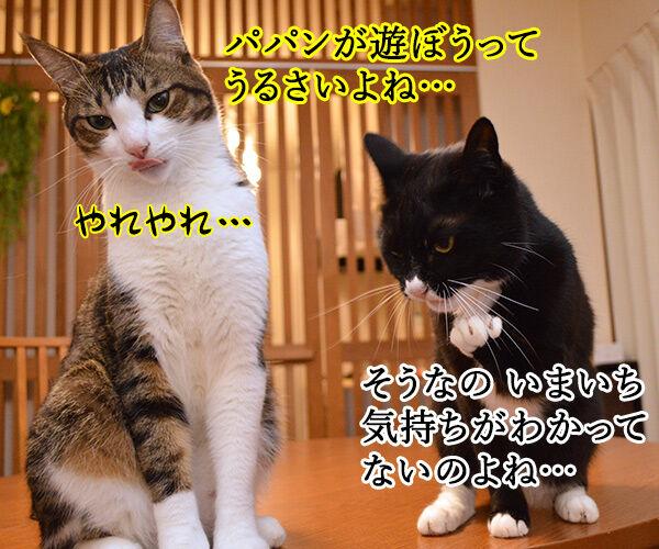 きもちがわかるやつ 猫の写真で4コマ漫画 1コマ目ッ