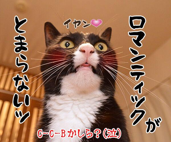 だいずが100歳まで生きるなら 猫の写真で4コマ漫画 4コマ目ッ