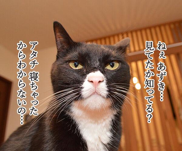 見ちゃったけどなにか? 猫の写真で4コマ漫画 1コマ目ッ