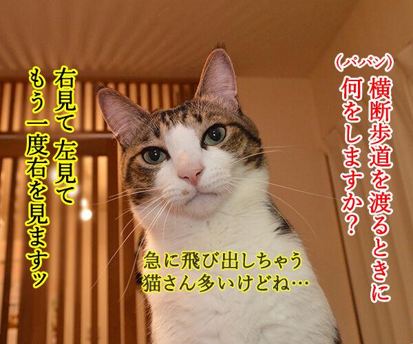 右見て・左見て・もう一度右見て 猫の写真で4コマ漫画 1コマ目ッ