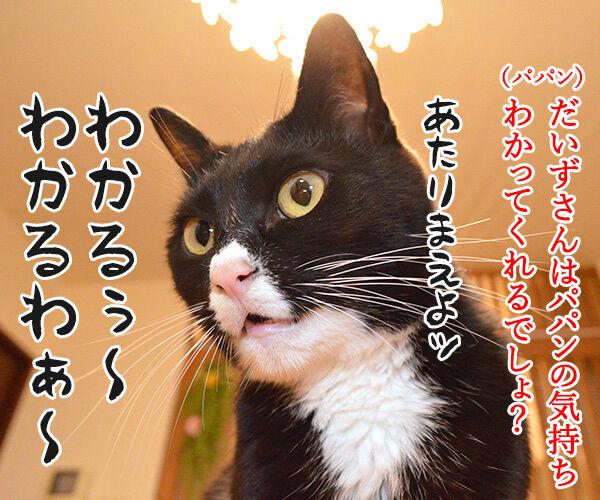 ツール・ド・フランスのヒト 猫の写真で4コマ漫画 3コマ目ッ