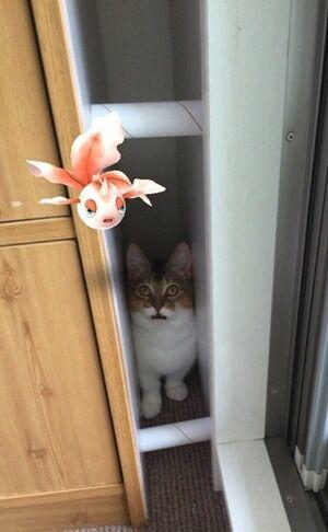 猫さんはポケモンが見えるんですってッ 猫の写真で4コマ漫画 5コマ目ッ
