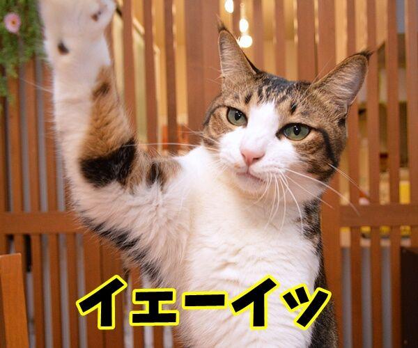 みんなー のってるかーい? 猫の写真で4コマ漫画 2コマ目ッ