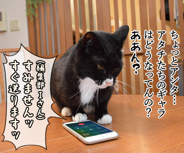 PETomorrowはオモローッ 猫の写真で4コマ漫画 1コマ目ッ