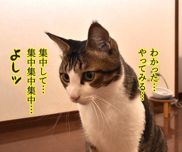超集中状態『ゾーン』に 入れるのよッ 猫の写真で4コマ漫画 3コマ目ッ