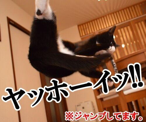 ハイテンションなアタチ 猫の写真で4コマ漫画 2コマ目ッ