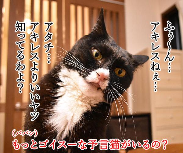 予言猫アキレスはW杯開幕戦を見事的中なのッ 猫の写真で4コマ漫画 3コマ目ッ