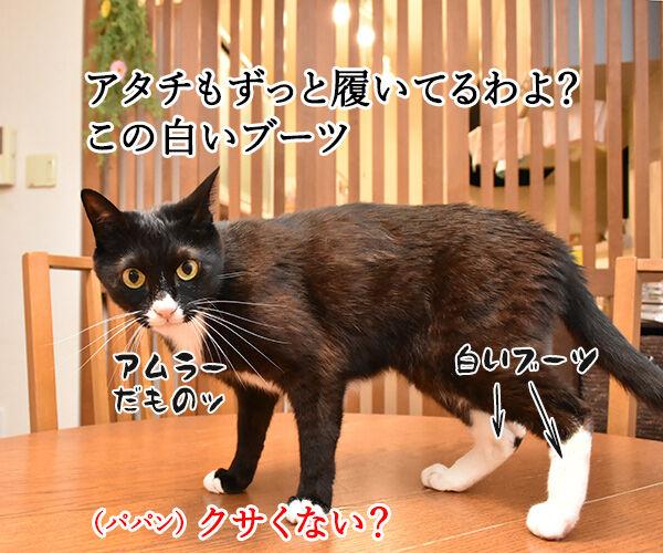スニーカーを買い替えようと思うのッ 猫の写真で4コマ漫画 2コマ目ッ