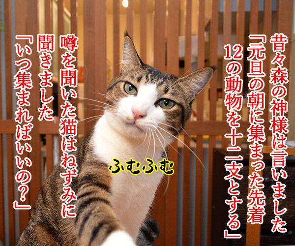 干支に猫がいないワケ 猫の写真で4コマ漫画 1コマ目ッ
