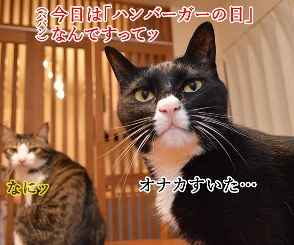 きょうは「ハンバーガーの日」だから 猫の写真で4コマ漫画 1コマ目ッ