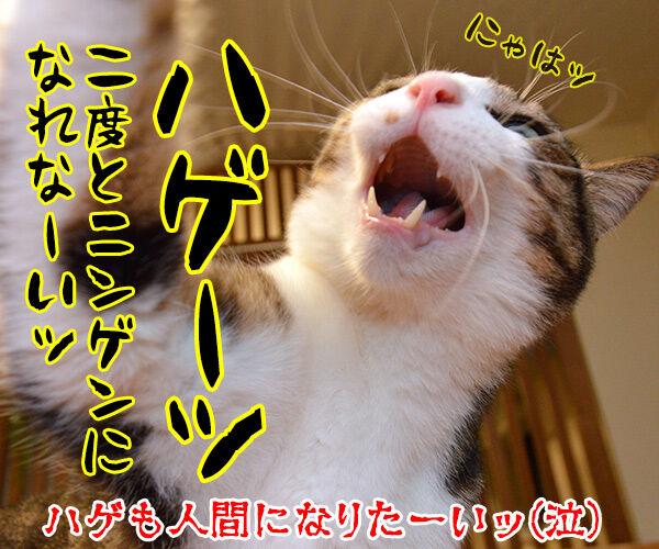 妖怪人間アズダイパパン 猫の写真で4コマ漫画 4コマ目ッ
