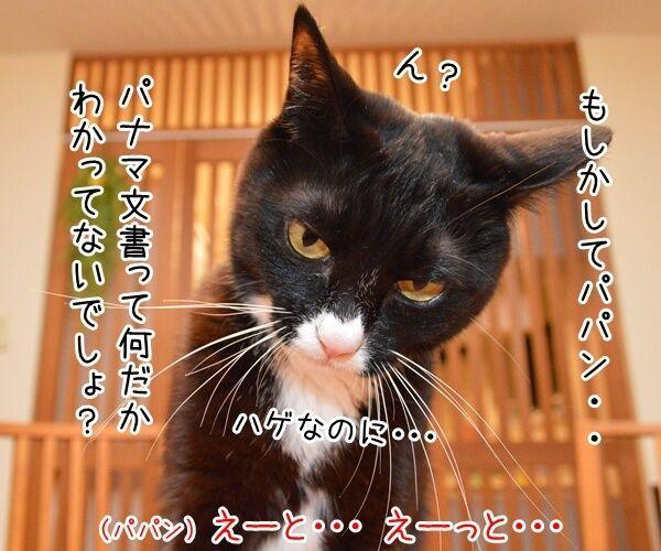 パナマ文書に載ってる日本人の名前は? 猫の写真で4コマ漫画 2コマ目ッ