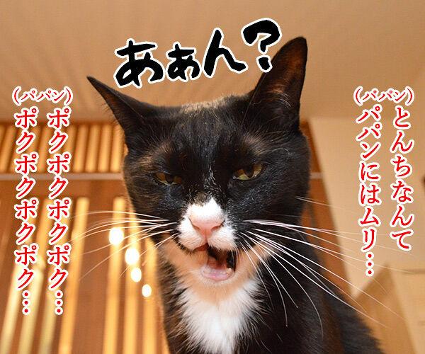 とんちんかんちん一休さん 猫の写真で4コマ漫画 2コマ目ッ