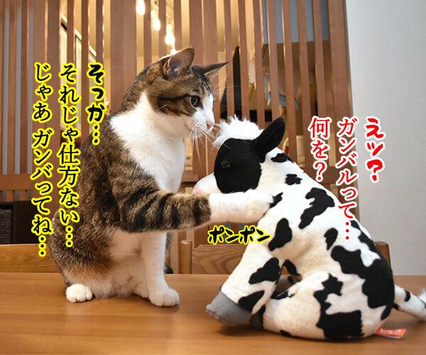 来年の干支の丑さんがご挨拶なのッ 猫の写真で4コマ漫画 4コマ目ッ