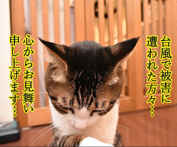 台風22号も強かったわね… 猫の写真で4コマ漫画 2コマ目ッ