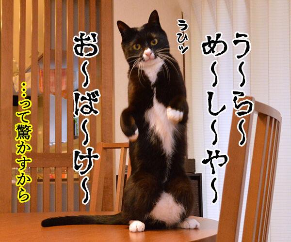 だってボク 猫の写真で4コマ漫画 2コマ目ッ