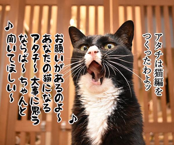 「部屋とYシャツと私」の続編が出てたのよッ 猫の写真で4コマ漫画 3コマ目ッ