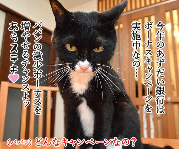 夏のボーナスキャンペーン開催中!! 猫の写真で4コマ漫画 3コマ目ッ